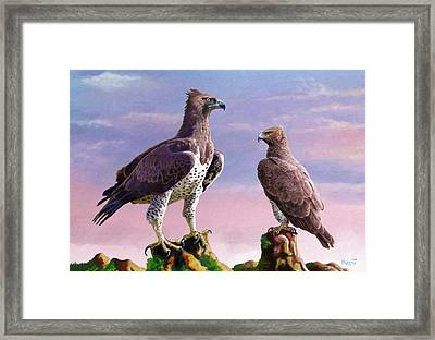Martial Eagles Framed Print