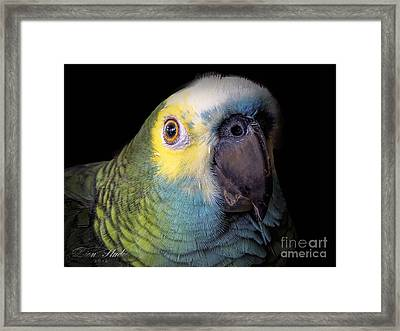 Marty The Blue Front Amazon Framed Print by Melissa Messick