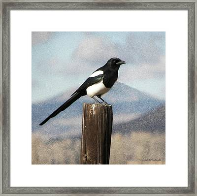Marty The Magpie Framed Print