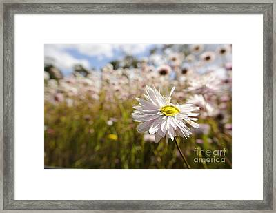 Marvelous Imperfection Framed Print by Oscar Moreno