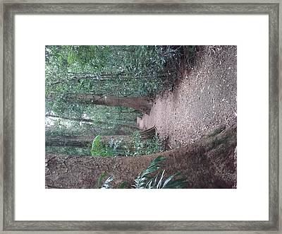 Mary Cairncross Rainforest  Framed Print