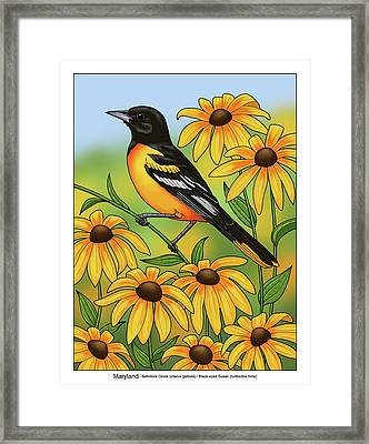 Maryland State Bird Oriole And Daisy Flower Framed Print