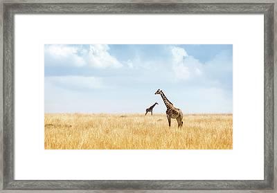 Masai Giraffe In Kenya Plains Framed Print
