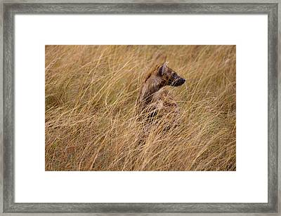 Masai Mara Hyena Framed Print by Paco Feria