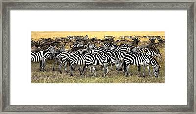 Masai Mara, Kenya Herd Of Burchells Framed Print by Chris Upton