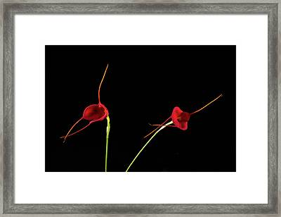 Framed Print featuring the photograph Masd Cheryl Shohan by Catherine Lau