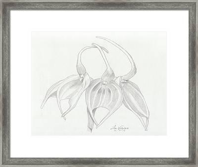 Masdevalia Tovarensis Orchid Framed Print