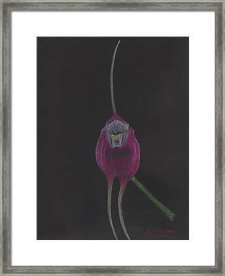 Masdevallia Infracta Orchid Framed Print