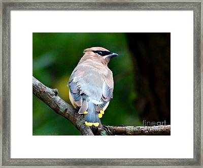 Mask And Feathers Framed Print