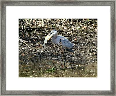Massive Meal Framed Print by Al Powell Photography USA