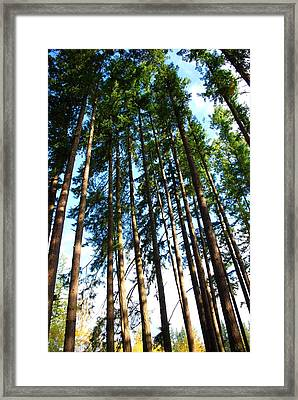 Mast Framed Print by Sergey and Svetlana Nassyrov