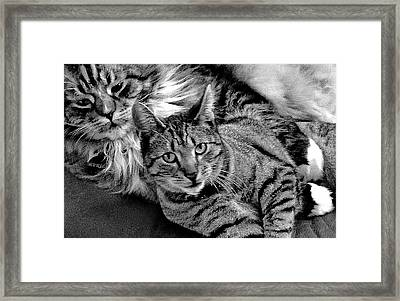Framed Print featuring the photograph Master And Apprentice by Roger Bester
