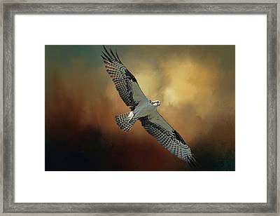 Framed Print featuring the photograph Master Fisher 2 by Donna Kennedy