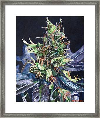 Master Kush Framed Print by Anita Toke