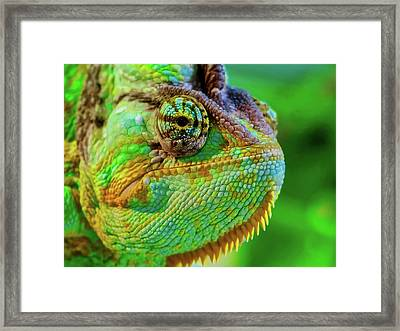 Master Of Disguise Framed Print by Jj01