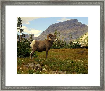Master Of His Domain Framed Print by Marty Koch