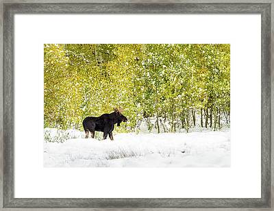 Master Of His Domain, Framed Print
