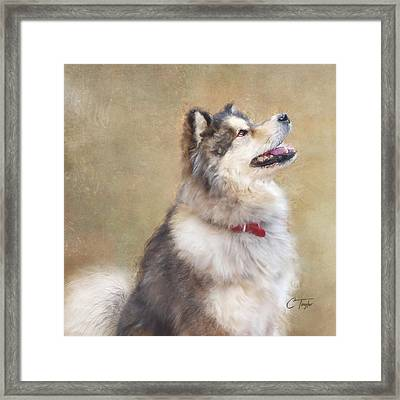 Framed Print featuring the painting Master Of The Domain II by Colleen Taylor