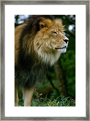 Master Of The Kingdom Framed Print by Sonja Anderson