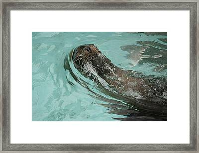 Master Swimmer Framed Print by Shelley Smith