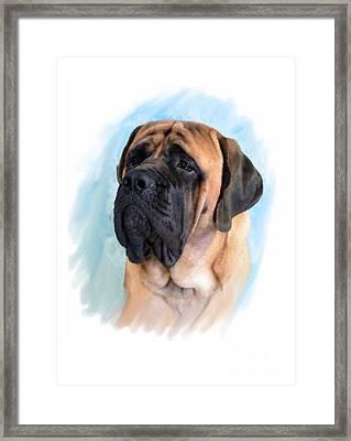 Mastiff 67 Framed Print by Larry Matthews