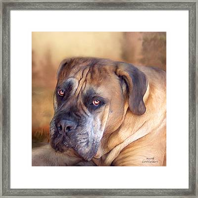 Mastiff Portrait Framed Print by Carol Cavalaris