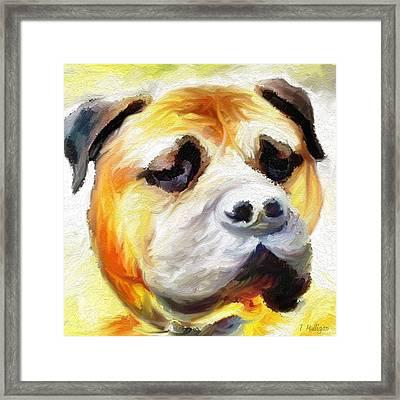 Mastiff Framed Print by Terry Mulligan