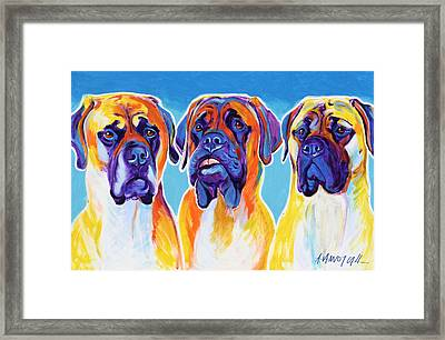 Mastiffs - All In The Family Framed Print