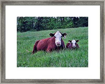 Framed Print featuring the photograph Matched Set by Cricket Hackmann