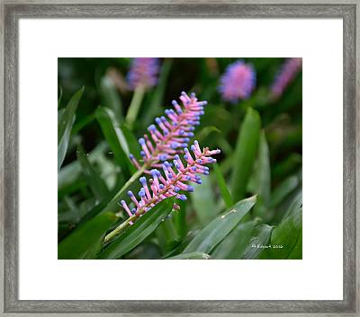 Matches... Framed Print