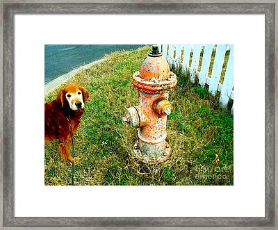 Matching Dog And Fire Hydrant Framed Print by Chuck Taylor