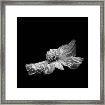 Matilija Framed Print by Joseph Smith