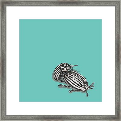 Mating Beetles Framed Print