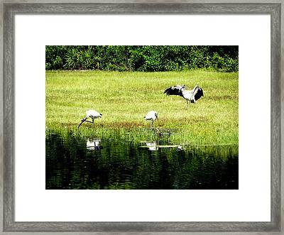 Framed Print featuring the photograph Mating Dance by Terri Mills