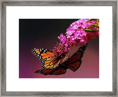 Mating Game II Framed Print by Irma BACKELANT GALLERIES