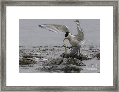 Mating Pair 2 Framed Print
