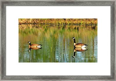 Mating Pair Framed Print by Dennis Hammer