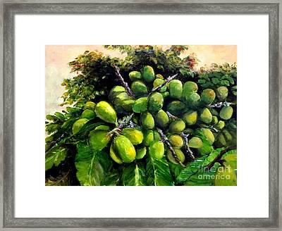 Matoa Fruit Framed Print