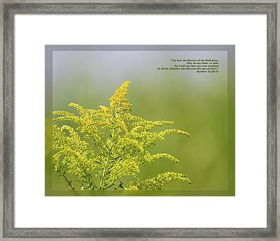 Framed Print featuring the photograph Matthew 6 28b-29 by Dawn Currie