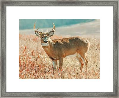 Mature Male Whitetail Deer Framed Print