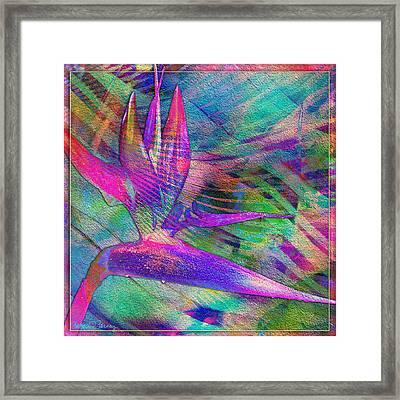 Maui Bird Of Paradise Framed Print by Barbara Berney