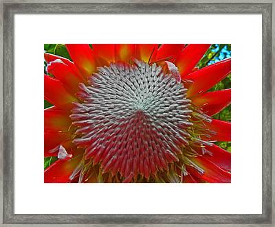 Maui Flower I Framed Print by Elizabeth Hoskinson