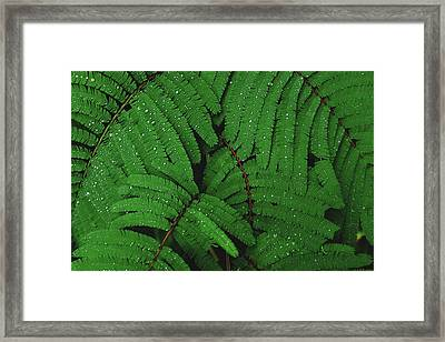 Maui Forest Framed Print