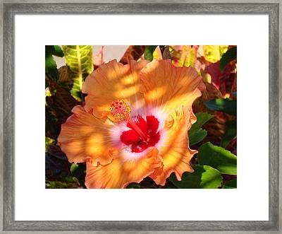 Framed Print featuring the photograph Maui Hybiscus  by Tamara Bettencourt