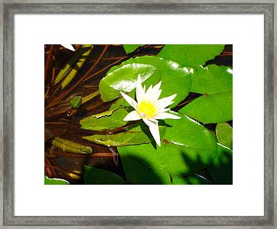 Framed Print featuring the photograph Maui Lily by Tamara Bettencourt