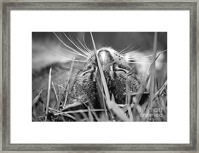 Maui Meo Caught Catnapping Framed Print by Jim Cazel