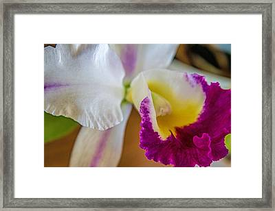 Maui Orchid Framed Print by Alana Thrower