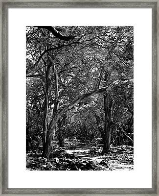 Framed Print featuring the photograph Maui Trees by Art Shimamura