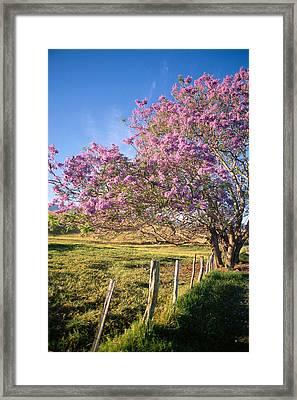 Maui Upcountry Framed Print