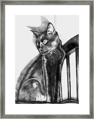 Framed Print featuring the drawing Maurice  by Shawna Rowe